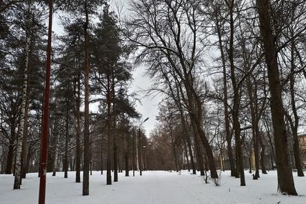 Нижегородский парк «Швейцария» получил от ВООП «Зеленую гарантию» на деревья