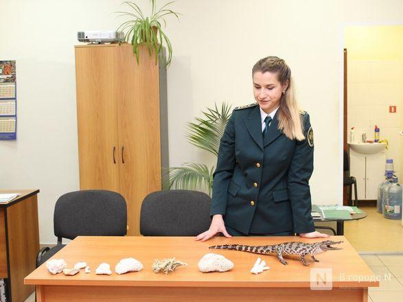 """Крокодил в багаже: нижегородские таможенники показали """"шедевры"""" контрабанды - фото 28"""