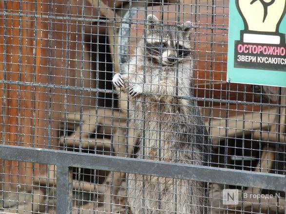 Выжить в пандемию: что происходило в закрытом зоопарке «Лимпопо» - фото 53