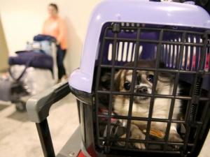 Перевозить домашних животных без сопровождения можно в 226 поездах
