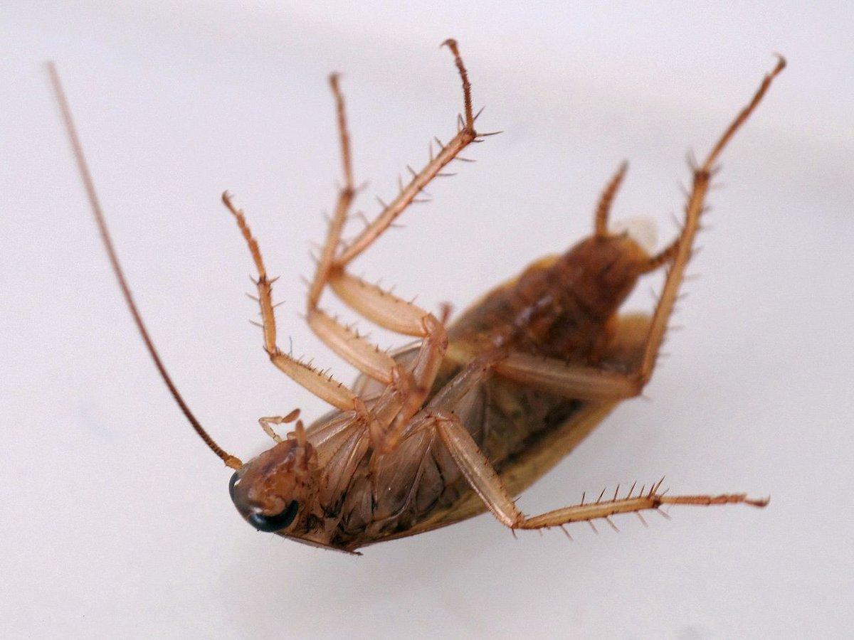 На нижегородку, которая натравила тараканов на сотрудников ДУКа, не стали заводить уголовное дело - фото 1