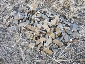 Более 200 противопехотных мин обнаружено в лесу у Торфосклада