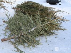 Борчанина отправили в колонию за срубленные елки
