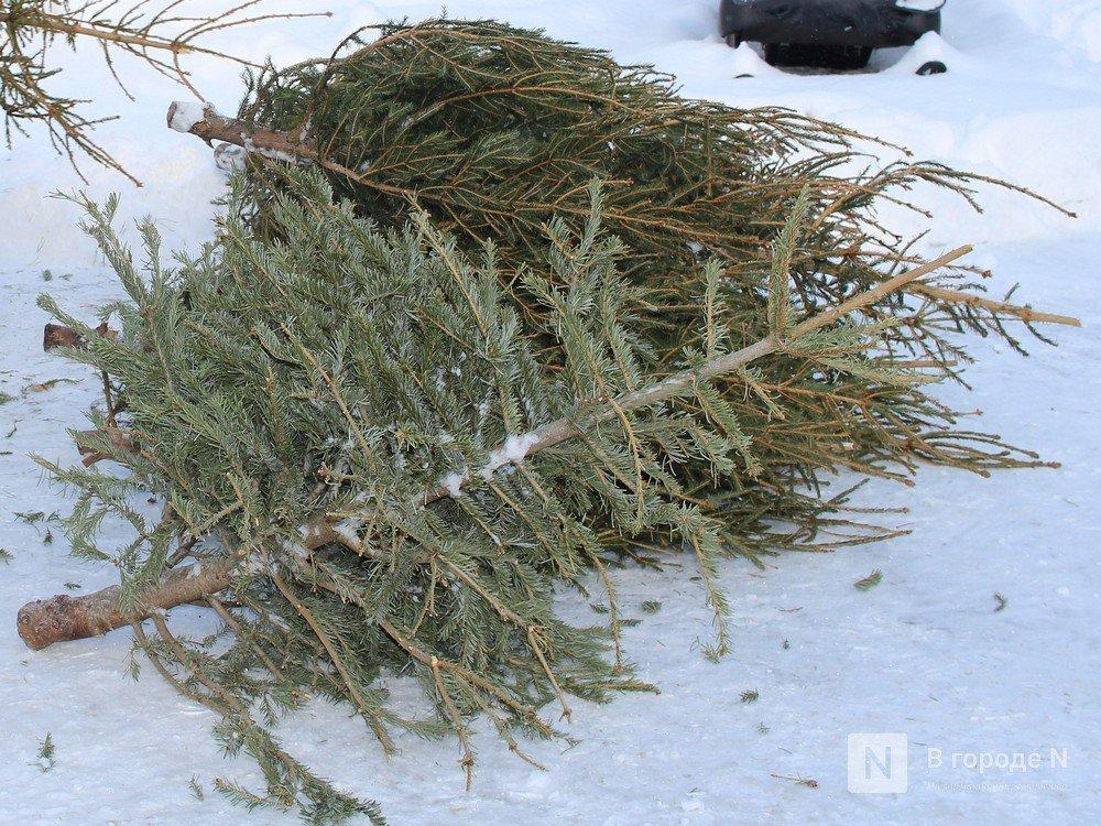 Тоншаевские браконьеры нарубили деревьев на 2 млн рублей