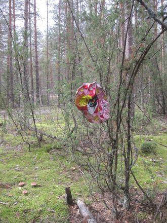 Нижегородцев просят не запускать в небо шары ради Керженского заповедника - фото 4