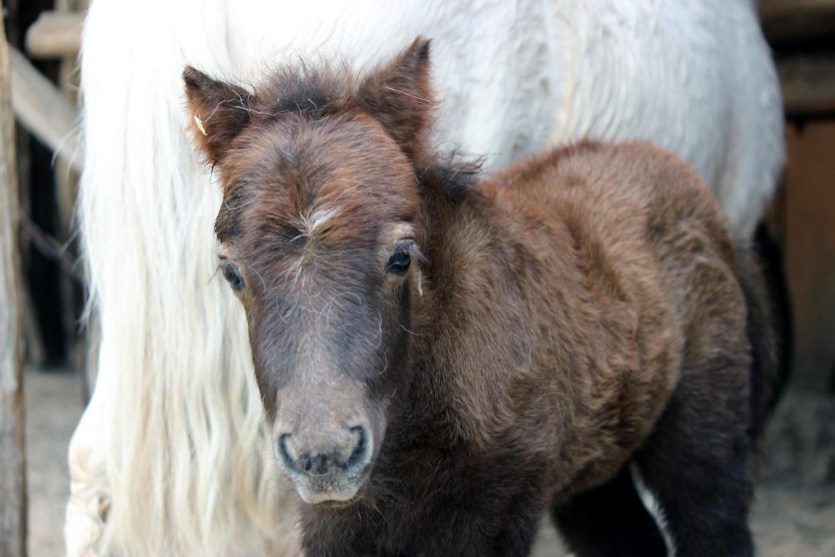 Нижегородцы дали имя жеребенку из зоопарка - фото 1