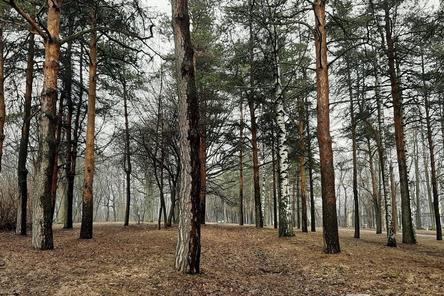 Нижегородский парк «Швейцария» сохранит свое название после благоустройства