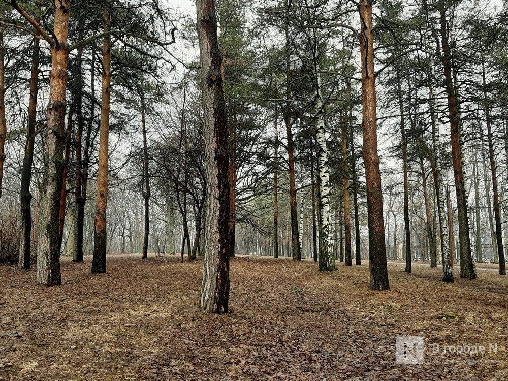 Нижегородский парк «Швейцария» начнут благоустраивать летом - фото 1