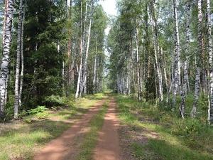 Авиапатрули будут отслеживать браконьеров в Нижегородской области