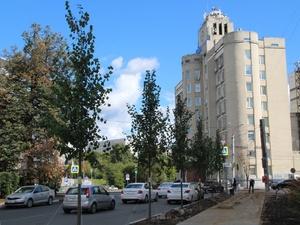 15 лип высадили на улице Октябрьской взамен спиленных деревьев