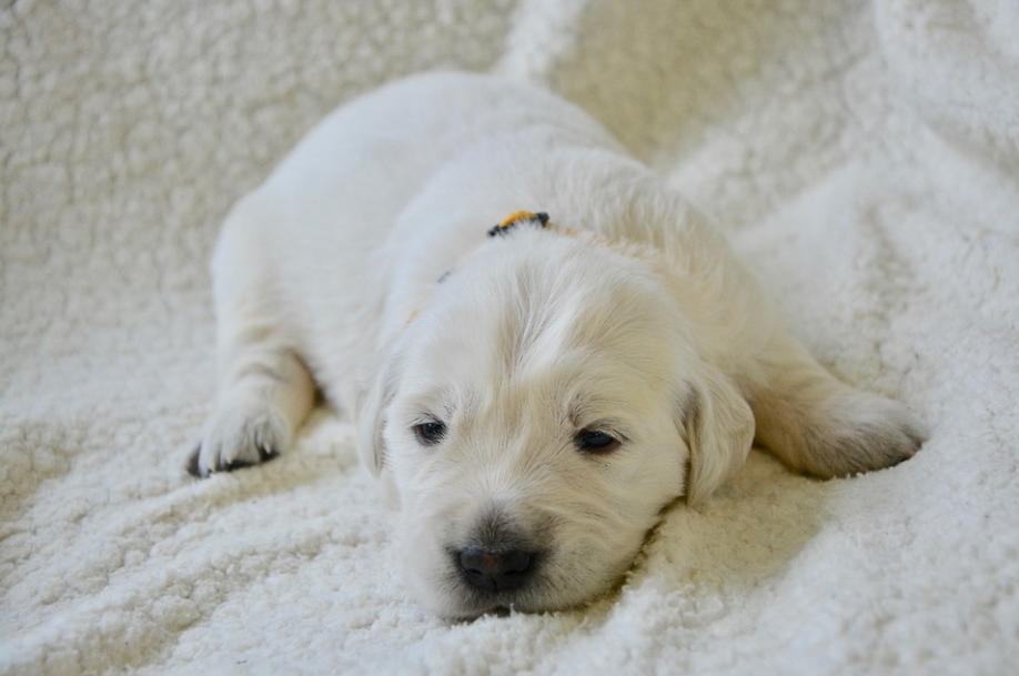В Роскачестве назвали марки худшего сухого корма для собак - фото 2